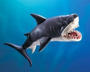 2410 Мягкая игрушка Акула белая большая, 84см Folkmanis (Фолкман