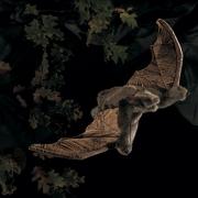 2391 Игрушка мягкая Летучая мышь Folkmanis