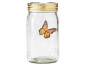 4011956 Бабочка в банке: Монарх