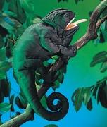 2215 Мягкая игрушка Хамелеон, 46см Folkmanis (Фолкманис)