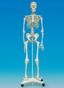SK160 Анатомия человеческого тела EDU-TOYS