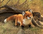 2876 Мягкая игрушка Рыжая лисица, 51 см