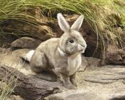 2891 Мягкая игрушка Американский кролик 36 см Folkmanis