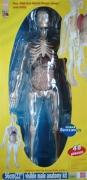 MK002 Анатомия человеческого тела EDU-TOYS