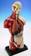 MK027 Анатомия человеческого тела EDU-TOYS