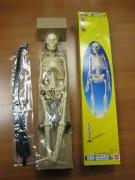 SK046 Анатомия человеческого скелета EDU-TOYS