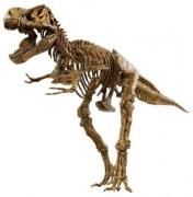VT026 Набор скелет динозавра 91см. EDU-TOYS
